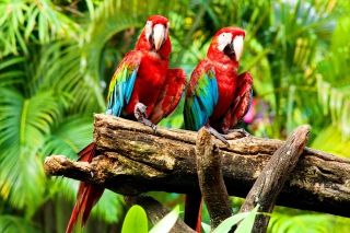 Exotic Birds Background for Android, iPhone and iPad