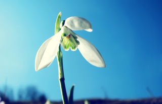 White Flower In Sky Background for Android, iPhone and iPad