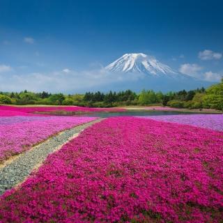 Japanese volcano in spring - Obrázkek zdarma pro 208x208
