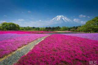 Japanese volcano in spring Background for Android, iPhone and iPad
