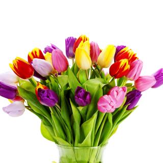 Tulips Bouquet - Obrázkek zdarma pro 128x128