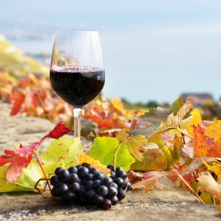 Wine Test in Vineyards - Obrázkek zdarma pro 320x320