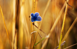 Blue Butterfly In Autumn Field Picture for Android, iPhone and iPad