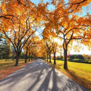 Autumn Alley in September - Obrázkek zdarma pro 128x128