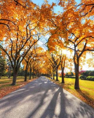 Autumn Alley in September - Obrázkek zdarma pro iPhone 4S
