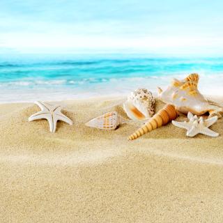 Seashells on Sand Beach - Obrázkek zdarma pro iPad 2