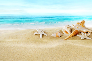 Seashells on Sand Beach Background for Android, iPhone and iPad