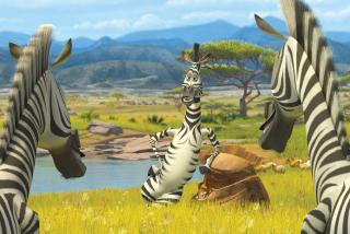 Zebra From Madagascar - Obrázkek zdarma pro 1600x1280