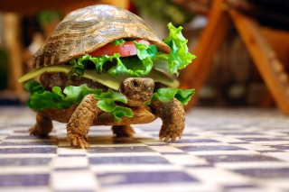 Turtle Burger Background for Android, iPhone and iPad