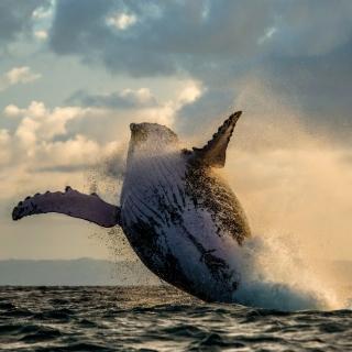 Whale Watching - Obrázkek zdarma pro 1024x1024