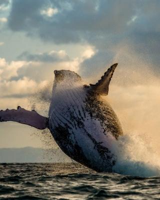 Whale Watching - Obrázkek zdarma pro iPhone 4