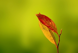 Red And Yellow Leaves On Green Wallpaper for Android, iPhone and iPad
