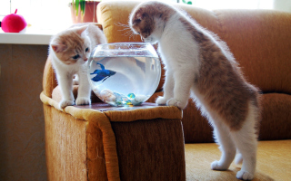 Kittens Like Fishbowl Background for Android, iPhone and iPad
