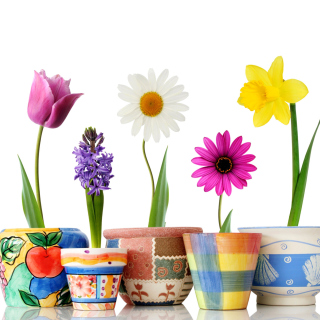 Bright flowers in pots - Obrázkek zdarma pro 128x128
