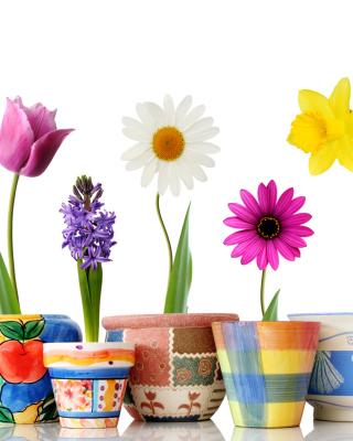 Bright flowers in pots - Obrázkek zdarma pro Nokia Asha 308