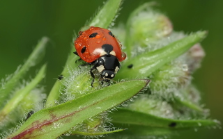 Free Ladybug Picture for Android, iPhone and iPad
