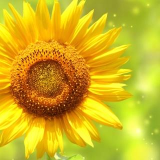 Giant Sunflower - Obrázkek zdarma pro iPad mini