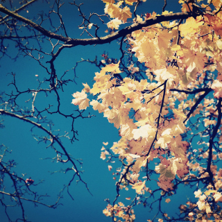 Fall Leaves - Obrázkek zdarma pro iPad Air