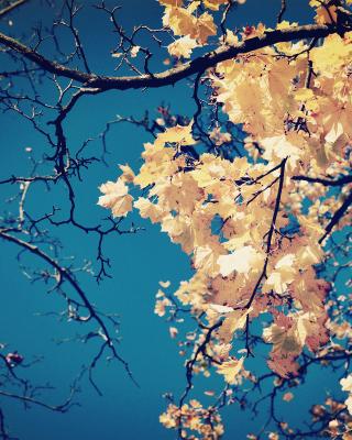 Fall Leaves - Obrázkek zdarma pro Nokia C5-05