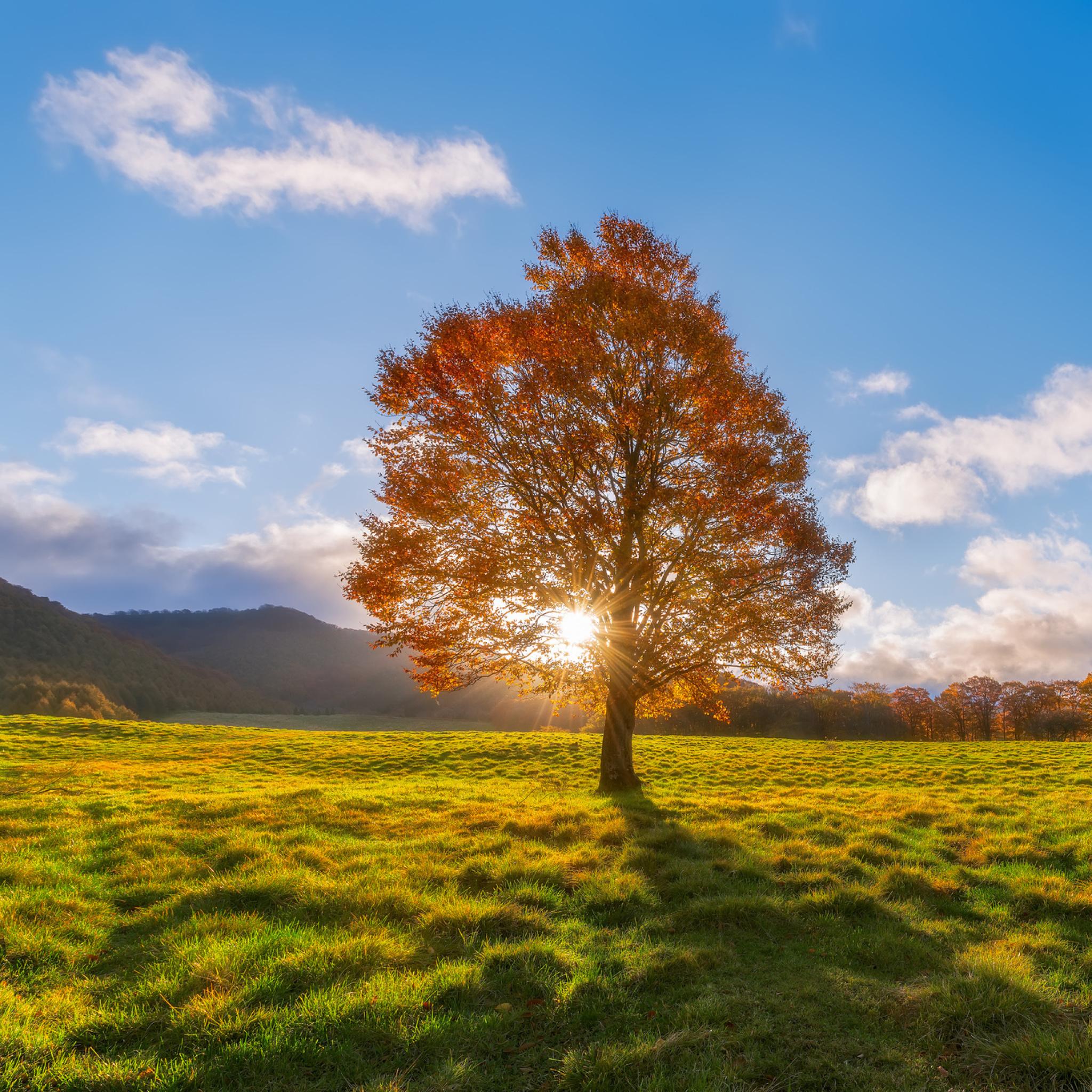 природа трава горизонт солнце деревья  № 2760811 загрузить