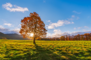 Autumn Sun Rays Background for Android, iPhone and iPad