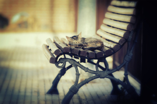 Cat Sleeping On Bench Picture for Android, iPhone and iPad