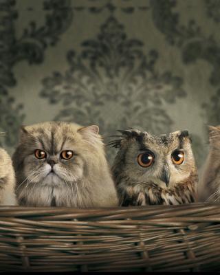 Cats and Owl as Third Wheel - Obrázkek zdarma pro 640x960