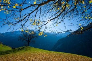 Autumn Schachental Switzerland Background for Android, iPhone and iPad
