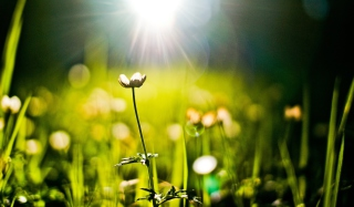 Flower Under Warm Spring Sun Wallpaper for Android, iPhone and iPad