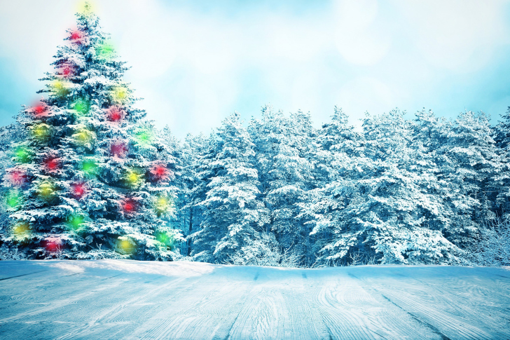 Bright Christmas Tree in Forest wallpaper