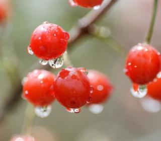 Waterdrops On Cherries - Obrázkek zdarma pro iPad