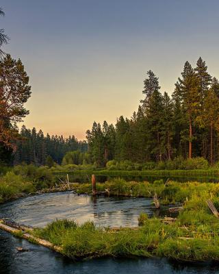 Russian Rural Landscape - Obrázkek zdarma pro Nokia X3-02