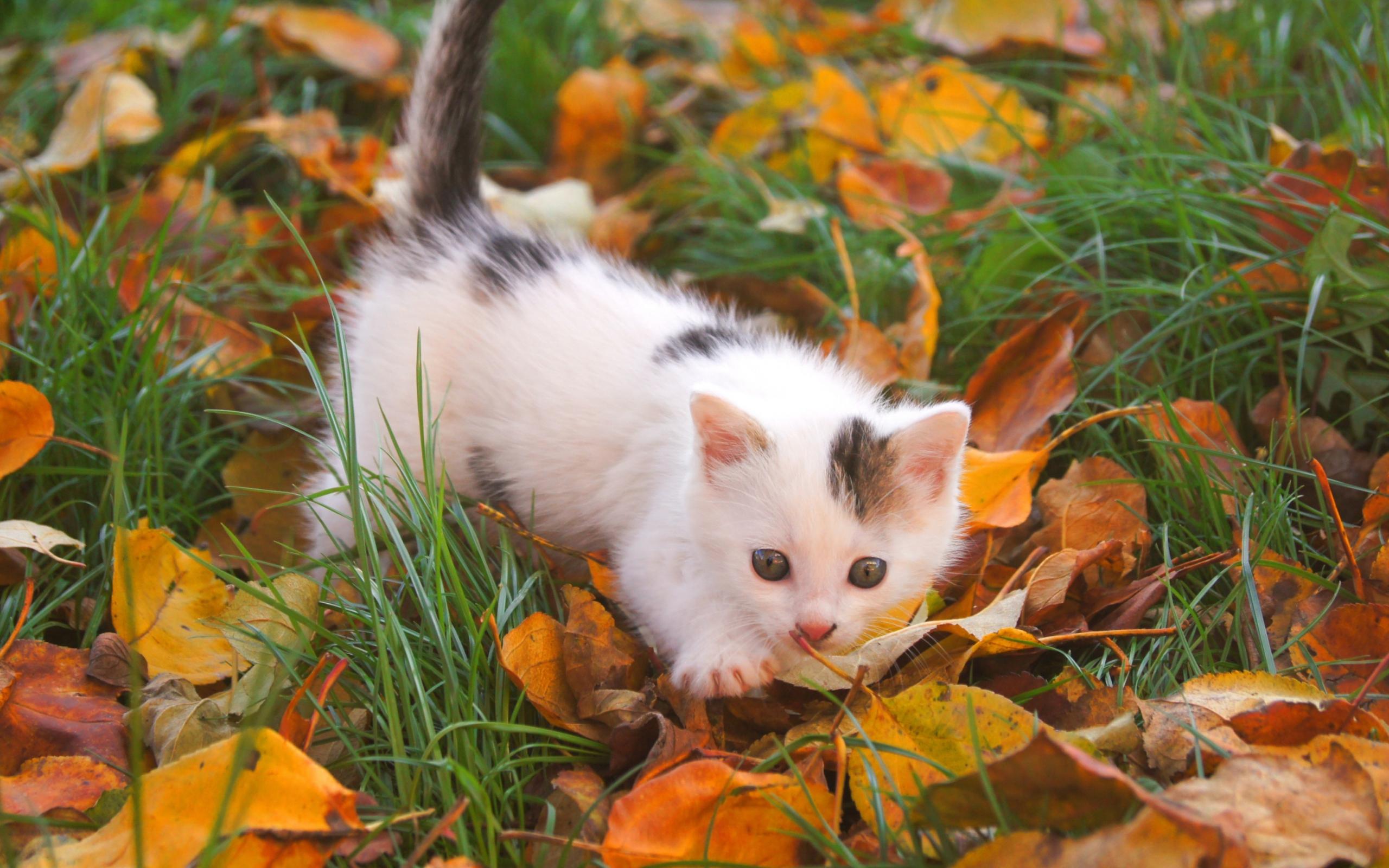 Котенок в мелкой траве  № 2954042 без смс