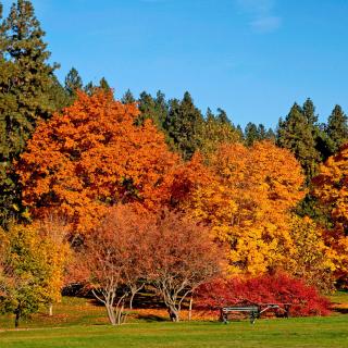 Autumn trees in reserve - Obrázkek zdarma pro 128x128