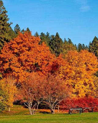 Autumn trees in reserve - Obrázkek zdarma pro Nokia C5-03