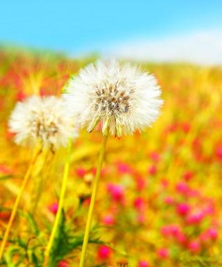 Spring Dandelions - Obrázkek zdarma pro Nokia X1-01