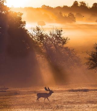 Deer At Meadow In Sunlights - Obrázkek zdarma pro Nokia X7