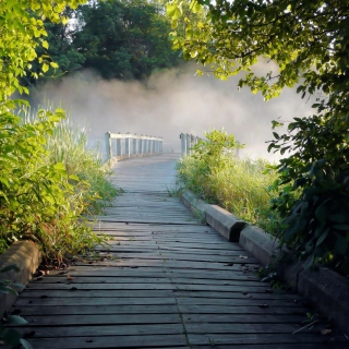 Misty path in park - Obrázkek zdarma pro iPad
