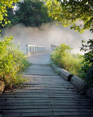 Misty path in park - Obrázkek zdarma pro Nokia Asha 300