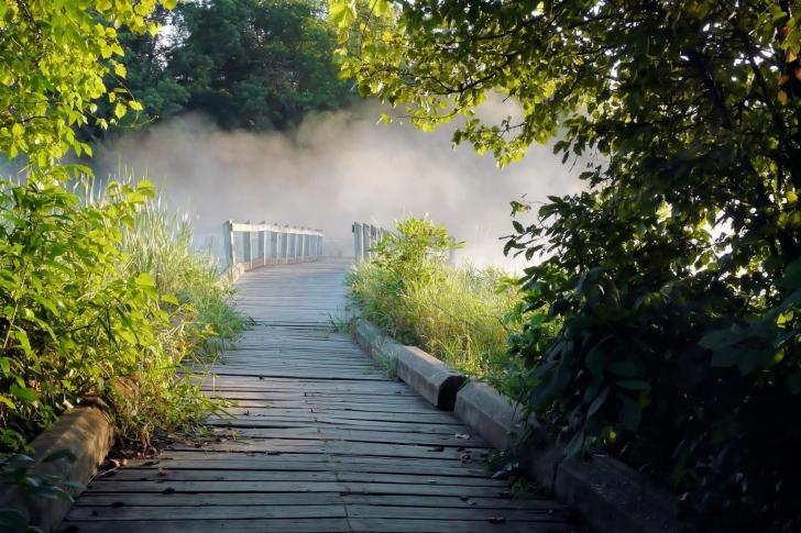 Misty path in park wallpaper