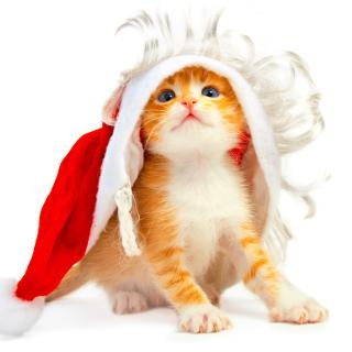 Cat Wanna Be Santa - Obrázkek zdarma pro 1024x1024
