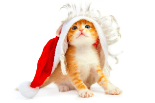 Cat Wanna Be Santa Picture for Android, iPhone and iPad