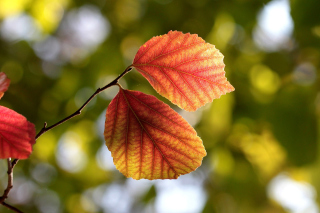 Autumn Macro Leaves Picture for Android, iPhone and iPad