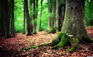 Free Forest Picture for Android, iPhone and iPad