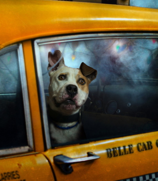 Yellow Cab Dog Background for 240x320