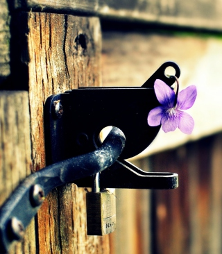 Purple Flower Lock Door Background for Nokia Asha 310