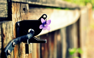 Purple Flower Lock Door Background for Android, iPhone and iPad