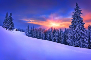 Winter Sunshine Wallpaper for Android, iPhone and iPad
