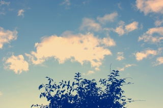 Sunny Sky And Tree Picture for Android, iPhone and iPad
