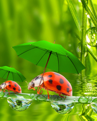 Funny Ladybugs Background for Nokia Asha 306